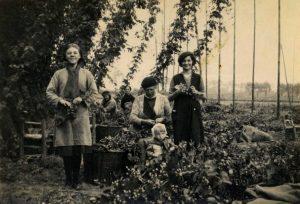 Hopoogst in Poperinge, 1939 - Bron: Westhoek Verbeeldt
